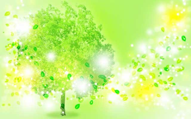 樹木葬の種類・費用・募集に関する基礎知識